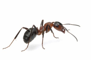 Florida Lawncare's Not A Fire Ant