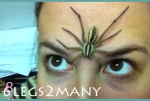 Large wolf spider on face (8legs2many)